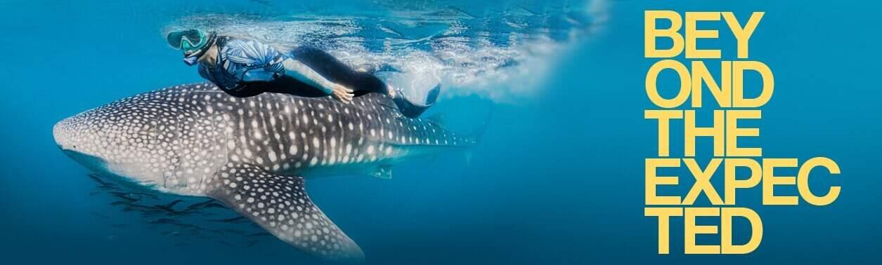 Hombre buceando con delfines con equipamiento aqualung